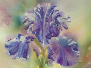 Iris No. 18 10x14, Watercolor © June Rollins