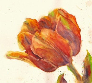 Tulip Study, 7x8, Watercolor ©June Rollins
