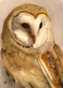 Barn Owl fb